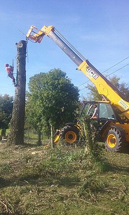 tree removal oldcastle